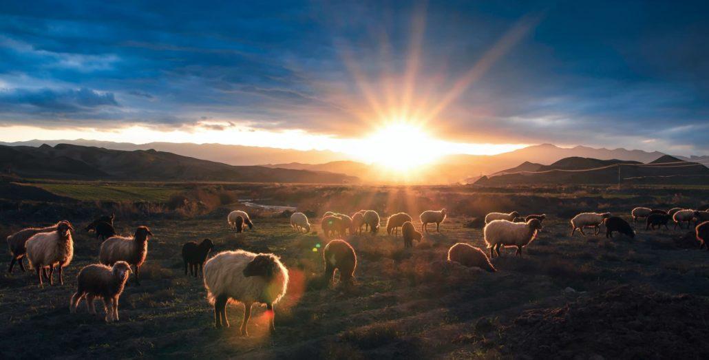 sheep goats judgment