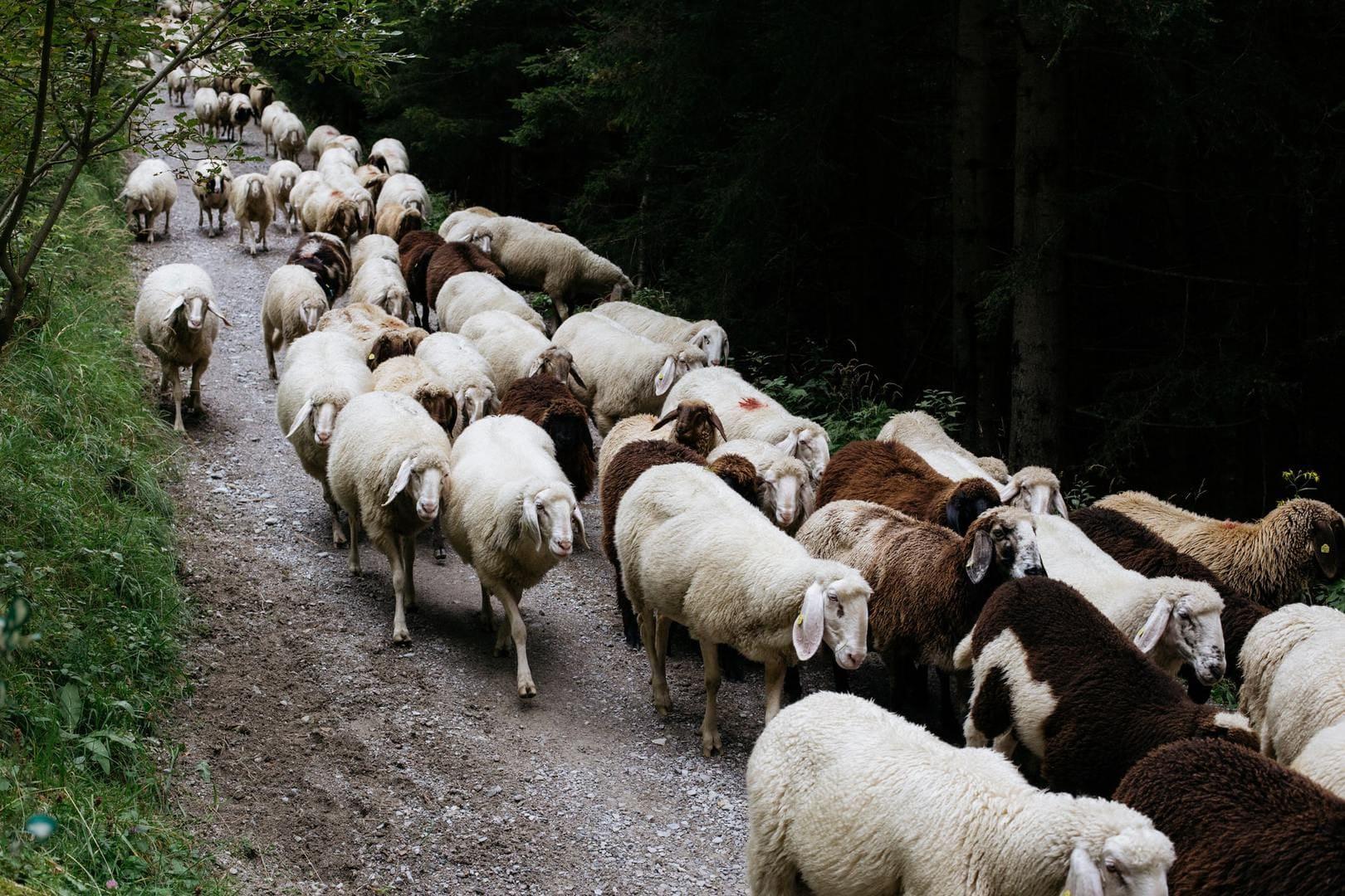 Shepherding, Policing, and Transforming Everything