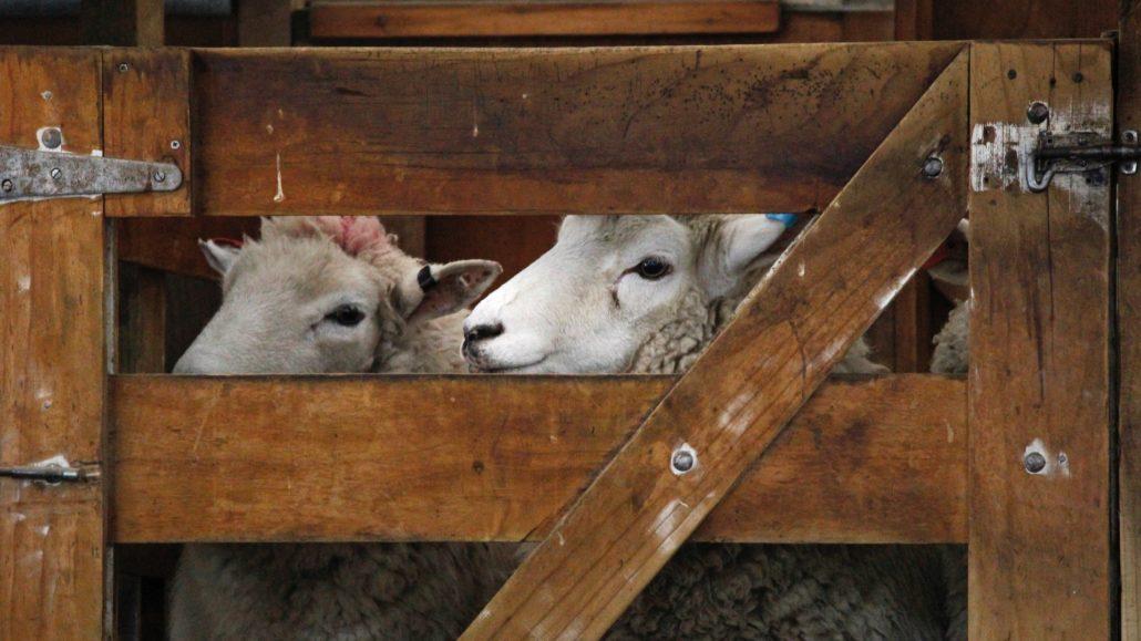jesus the sheep gate